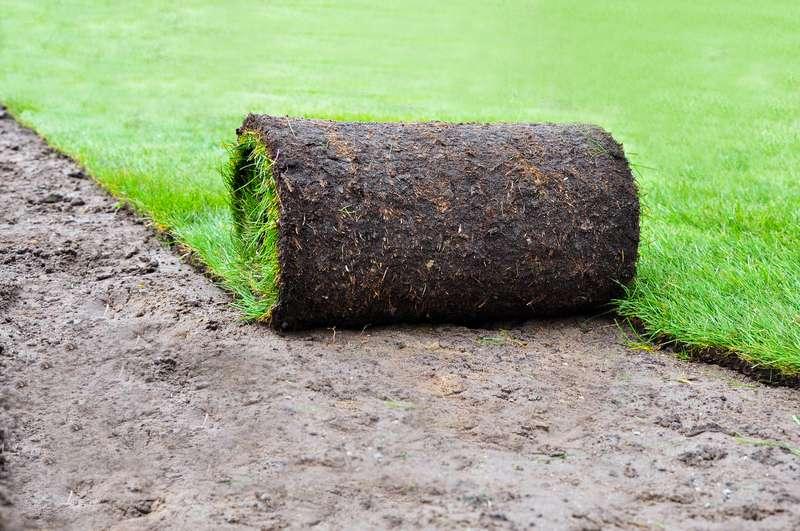 Pielęgnacja i zakładanie trawników